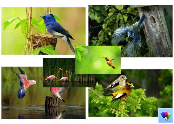 Wild-Birds-theme-for-Windows-8